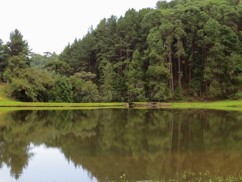 Lago tranquilo com reflexão da floresta no fundo fotografia de stock royalty free