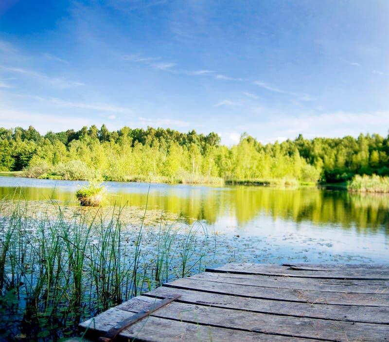 Lago tranquilo na floresta imagem de stock