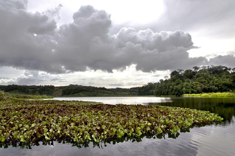 Lago tropical con las plantas y el bosque imagenes de archivo