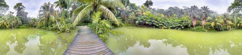Lago tropicale nella foresta di Cranbrook, Giamaica immagini stock libere da diritti