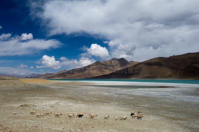 Lago tso de Yamdrok foto de archivo