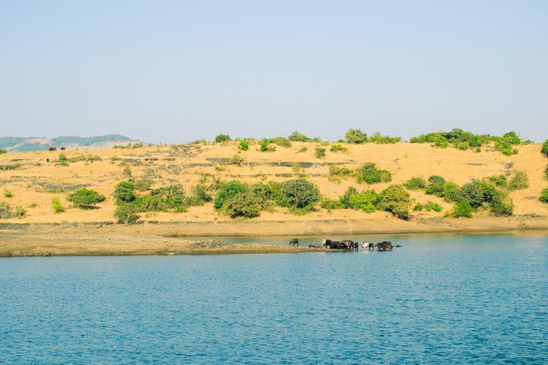 Lago Tungarli, Lonavala, maharashtra, la India imágenes de archivo libres de regalías
