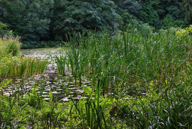 Lago verde foto de stock