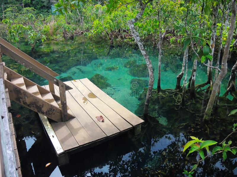 Lago verde claro hermoso del agua con las raíces del bosque del árbol y la costa de madera de la escalera en Krabi, parque nacion fotos de archivo