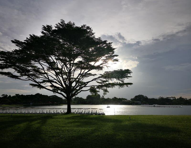 Lago vicino del grande albero del ‹di Silhouette†fotografia stock libera da diritti