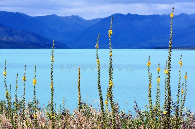 Lago Wakatipu Nova Zelândia NZ NZL fotos de stock