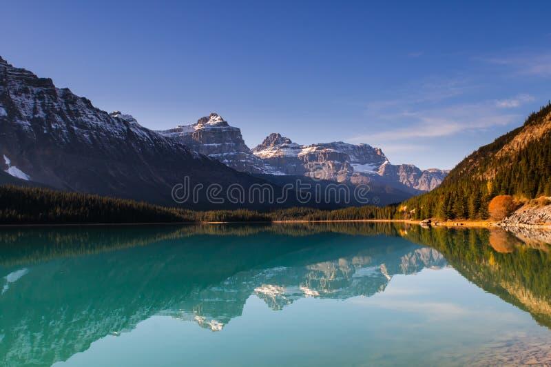 Lago waterfowl fotos de archivo libres de regalías