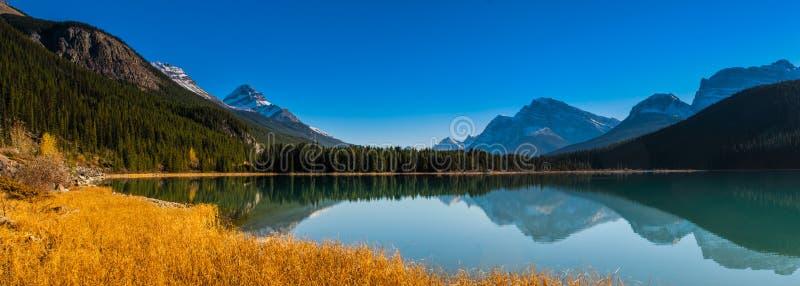 Lago waterfowl fotos de archivo