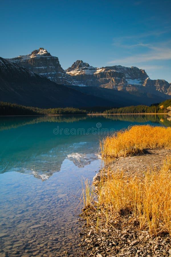 Lago waterfowl imagen de archivo