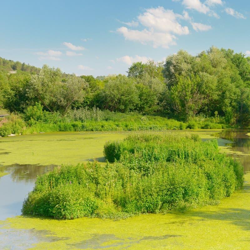Lago wetland fotos de archivo