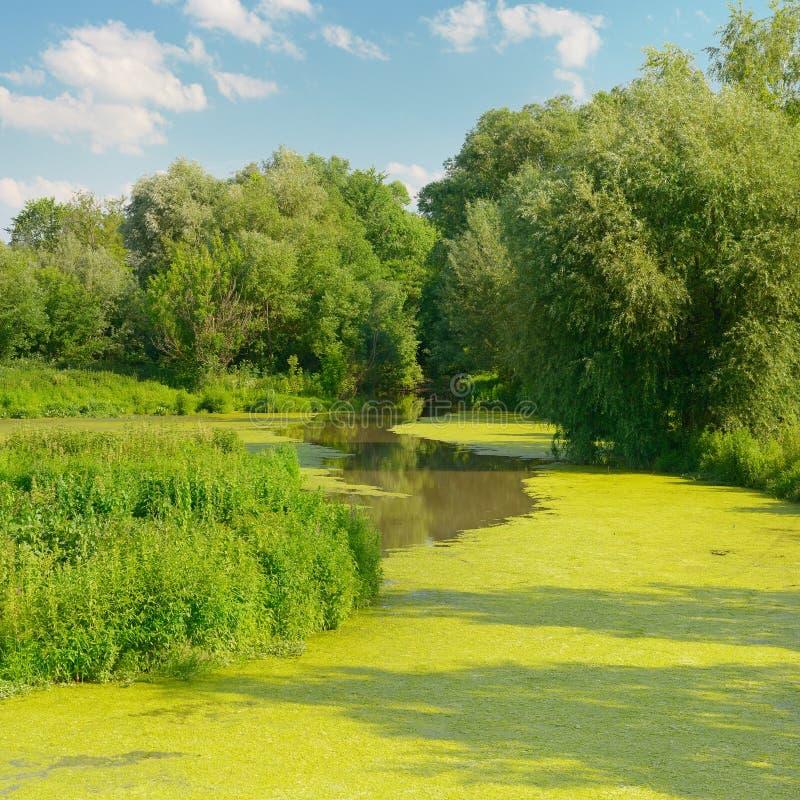 Lago wetland foto de archivo libre de regalías