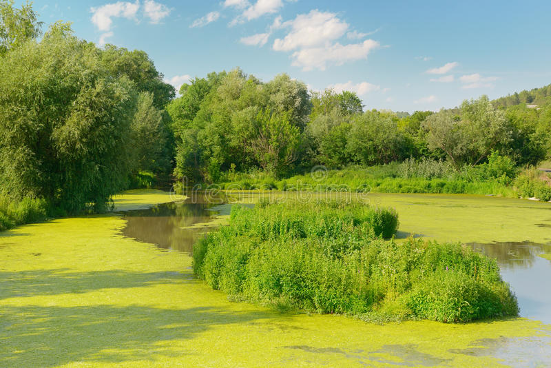 Lago wetland fotografia stock