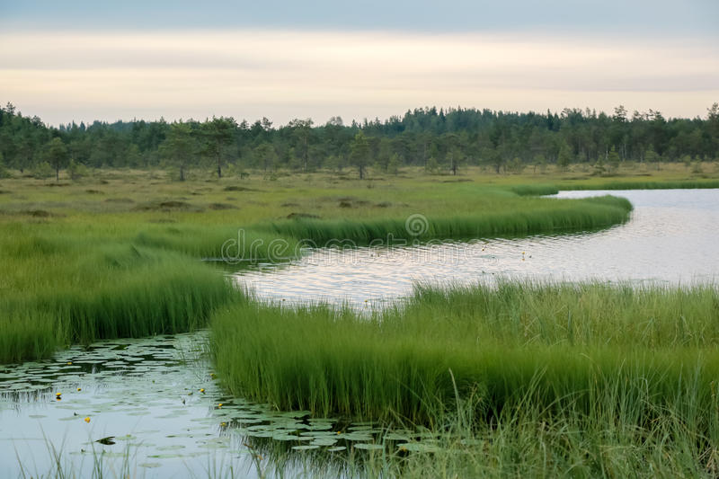 Lago wetland en un pantano fotografía de archivo libre de regalías