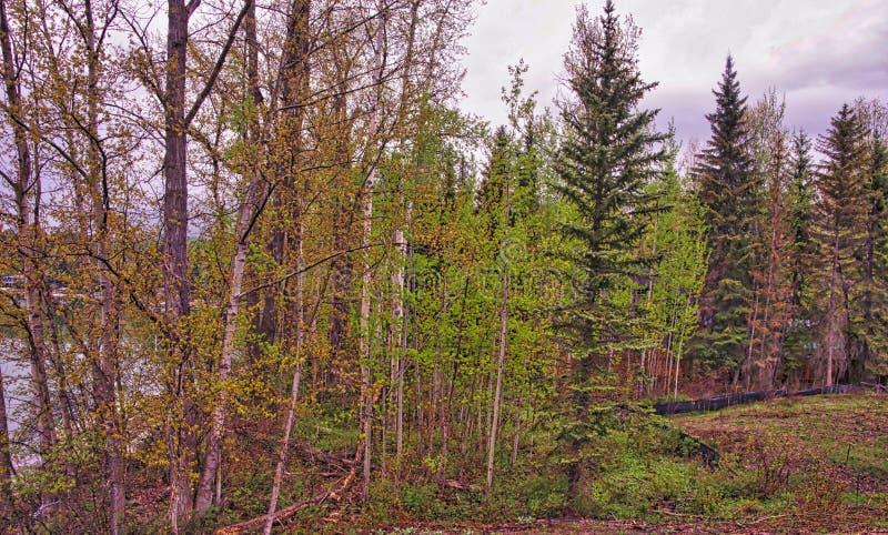 Lago whitefish, Montana fotos de stock royalty free