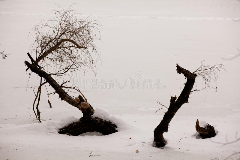 Lago winter foto de stock royalty free