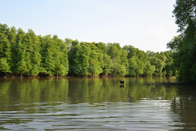 Lago woods imagens de stock royalty free