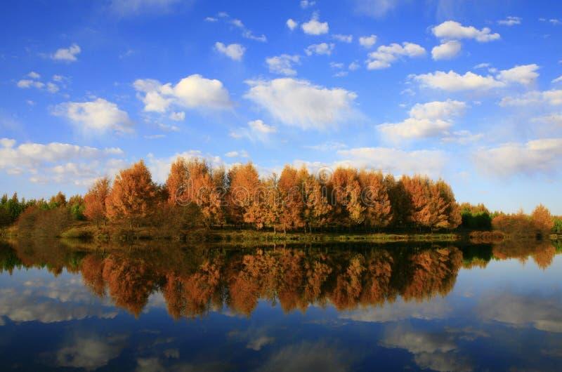 Lago y árboles fotografía de archivo