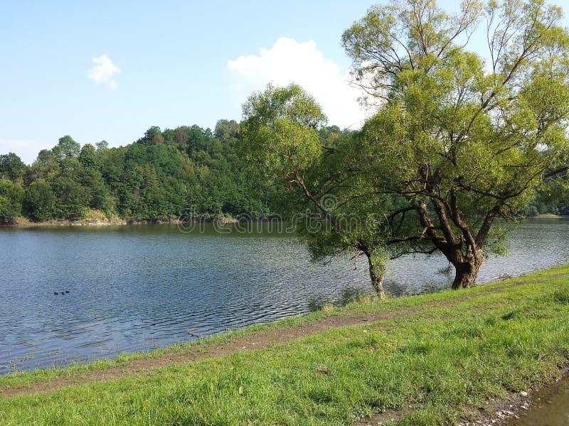 Lago y alrededores fotografía de archivo