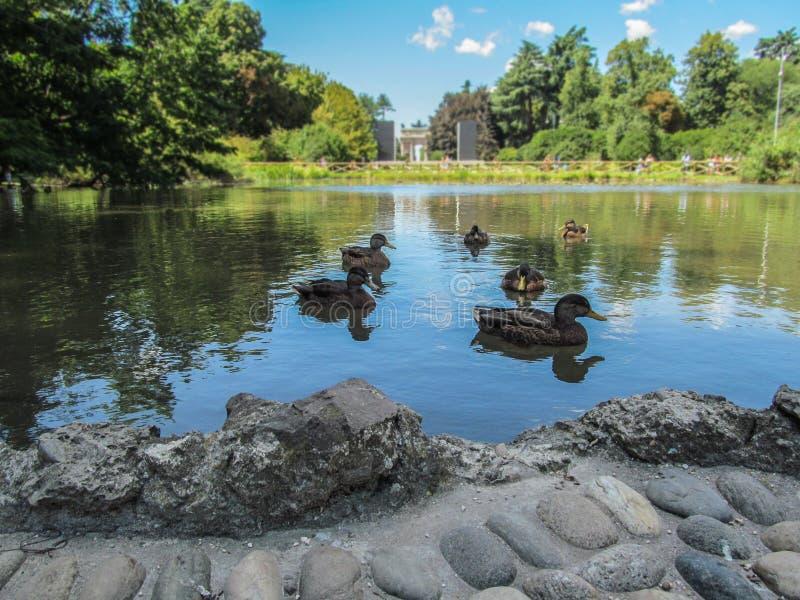 Lago y arco de la paz en el parque de Sempione en Milán imágenes de archivo libres de regalías