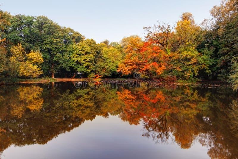Lago y bosque autumn fotografía de archivo libre de regalías