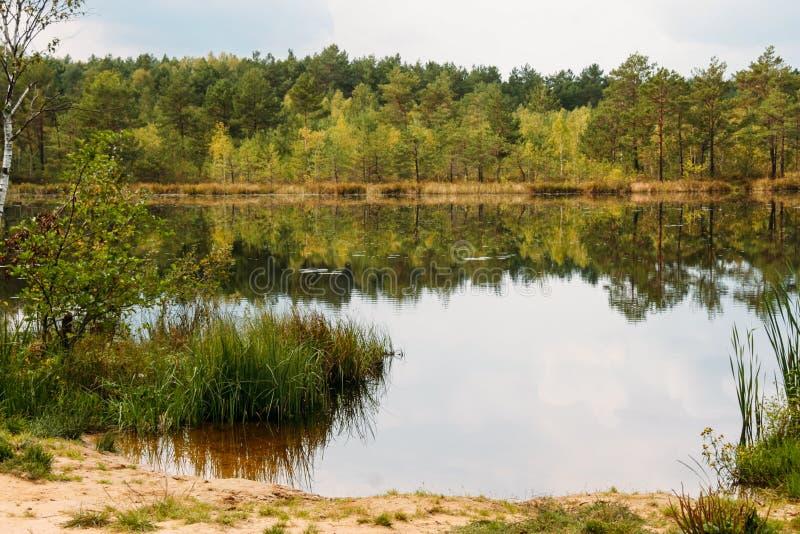 Lago y bosque conífero fotografía de archivo libre de regalías
