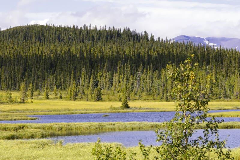 Lago y bosque escénicos del pino fotografía de archivo