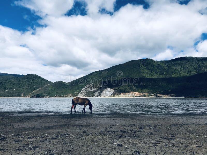 Lago y caballo fotografía de archivo