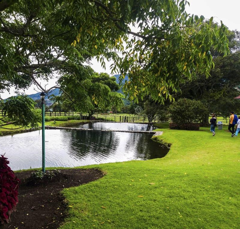 Lago y Flores stockfotos
