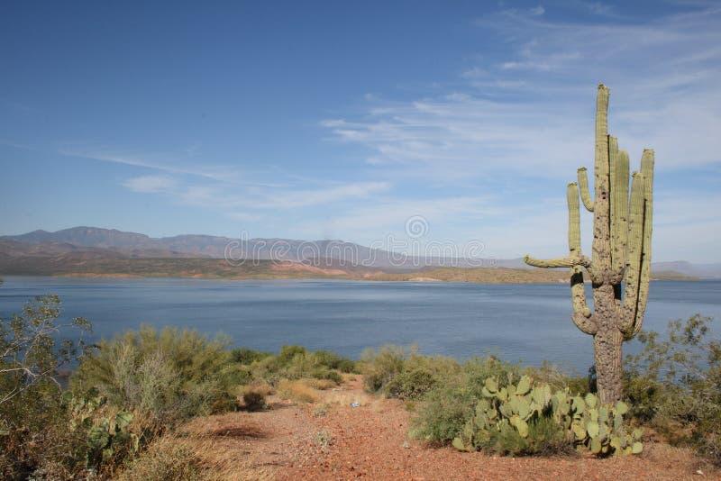 Lago y saguaro theodore Roosevelt foto de archivo