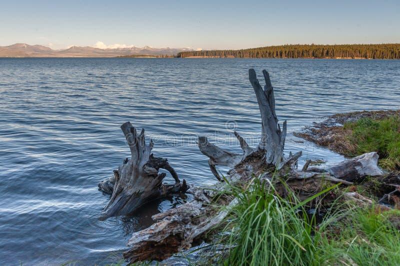 Lago Yellowstone intorno al tramonto fotografia stock