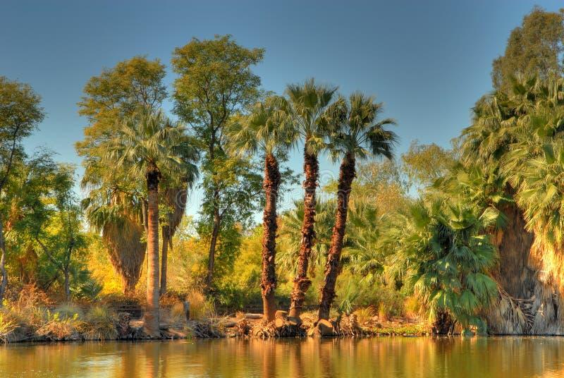 Lagoa 2 da selva fotografia de stock