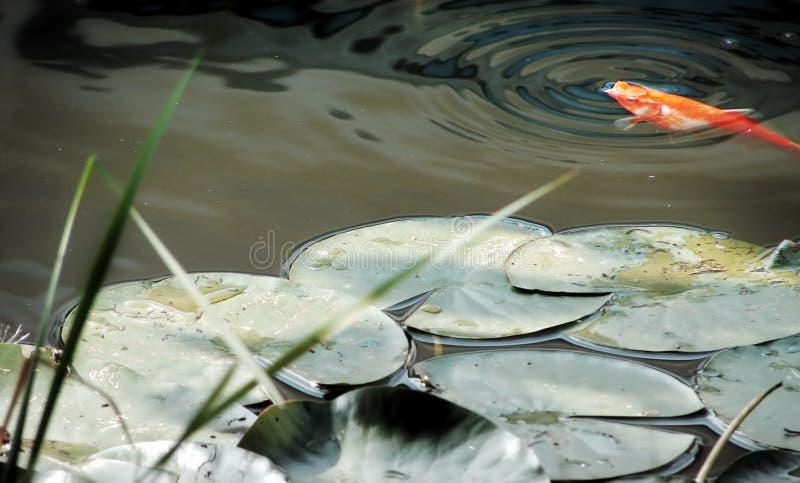 Download Lagoa imagem de stock. Imagem de oxigênio, alaranjado, vermelho - 200551