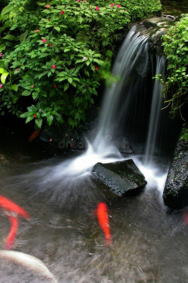 Lagoa 3 de Koi imagem de stock
