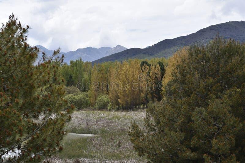 A lagoa apressa o bosque em montanhas do outono fotos de stock royalty free