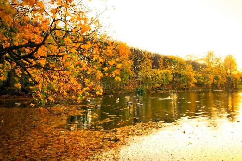Lagoa Bonita Do Parque No Outono Fotos de Stock Royalty Free