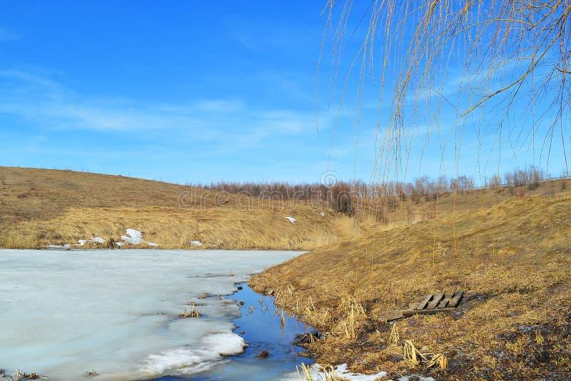 Lagoa bonita Willow Branches Céu azul de fascinação imagem de stock