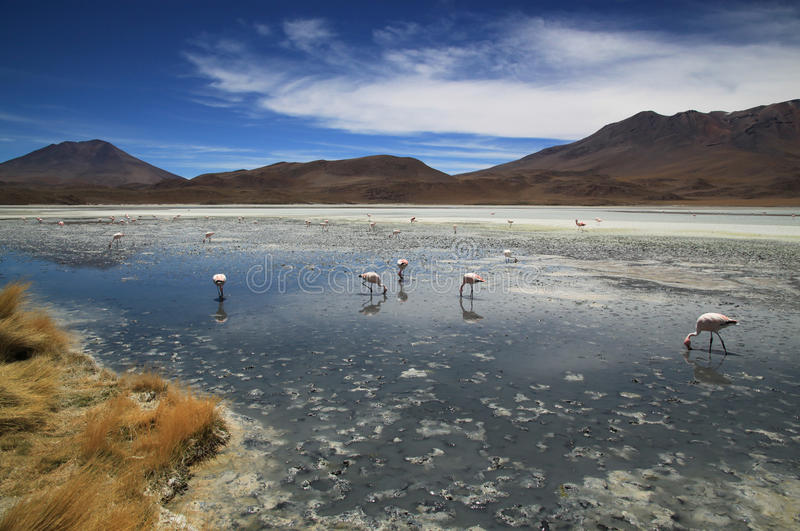 Lagoa cênico em Bolívia, Ámérica do Sul fotos de stock