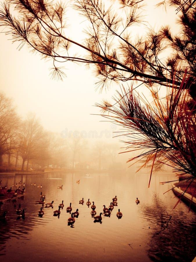 Lagoa calma fotografia de stock royalty free