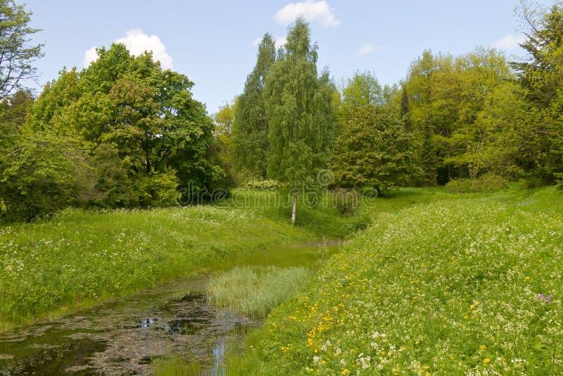 Lagoa coberto de vegetação da floresta fotos de stock royalty free