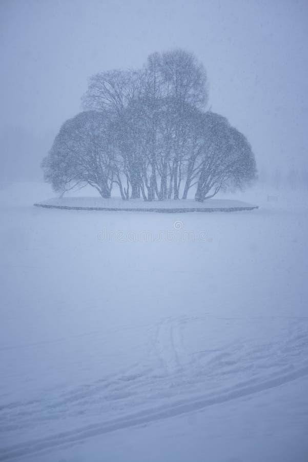 a lagoa congelada com uma ilha completa das árvores foto de stock