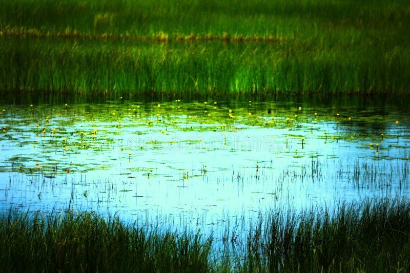 Lagoa da almofada de lírio imagem de stock royalty free