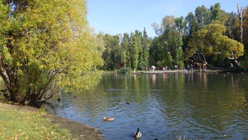 Lagoa da cidade Árvores na costa Paisagem imagem de stock royalty free