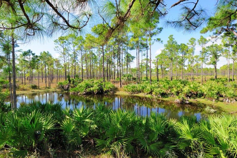 Lagoa da floresta horizontal fotografia de stock