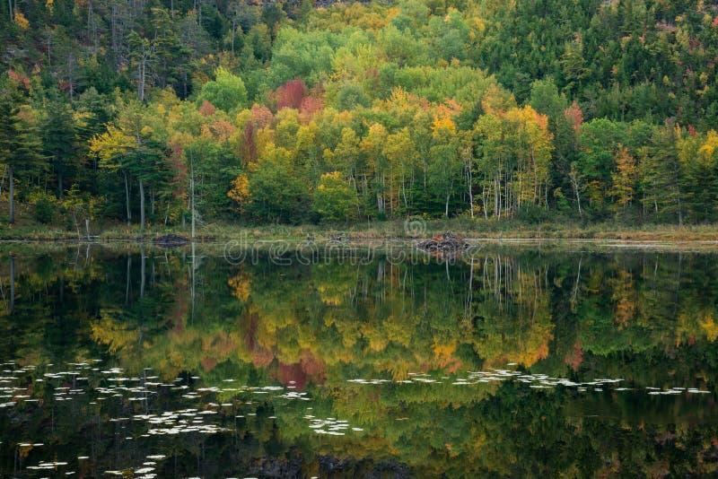 Lagoa da represa do castor imagens de stock royalty free