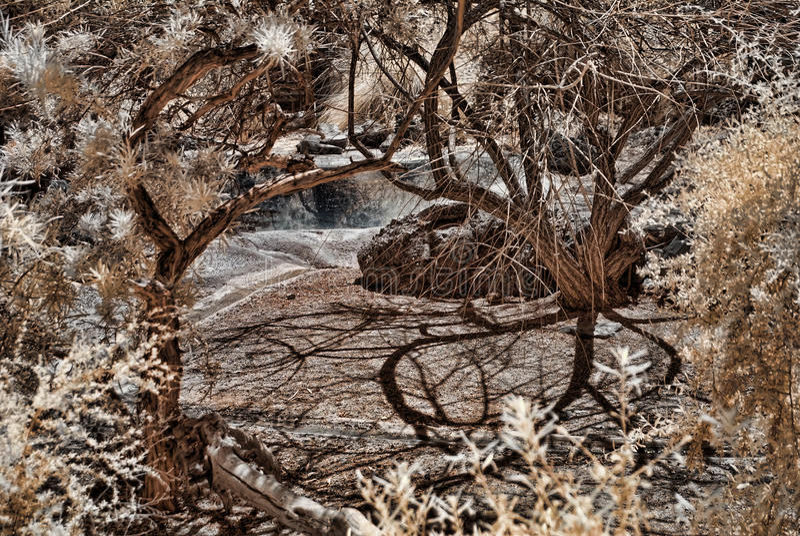 Lagoa da selva imagens de stock