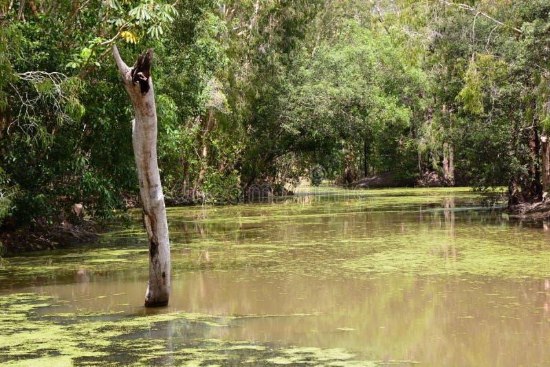 A lagoa de Hartley Explora??o agr?cola do crocodilo de Hartley Wangetti Condado de Douglas queensland austr?lia fotos de stock royalty free