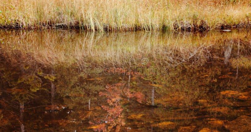 Lagoa de Jordão, cores da queda da floresta nacional do Acadia. fotografia de stock royalty free