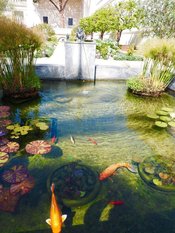 Lagoa de Koi foto de stock royalty free