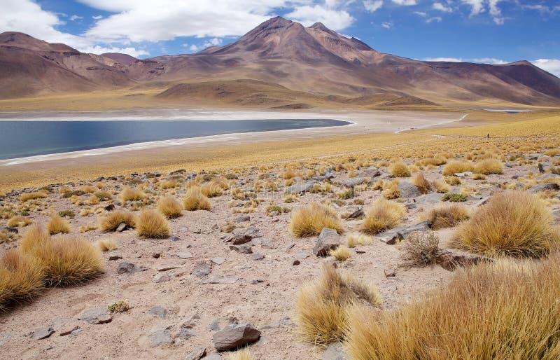 Lagoa de Miscanti e Miniques, o Chile fotos de stock