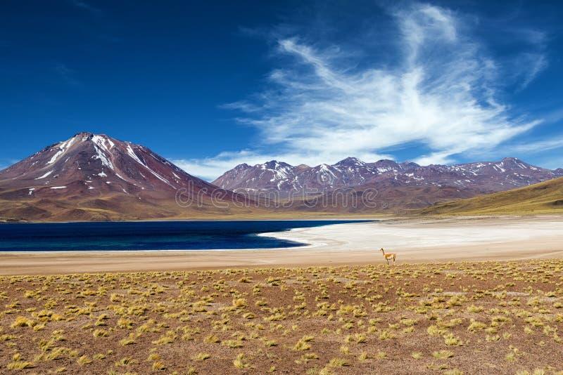 Lagoa de Miscanti no deserto de Atacama fotos de stock